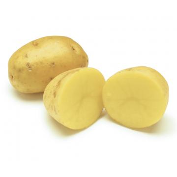 Potato Dutch / Table Potato